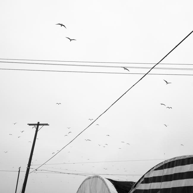 Birds and telephone pole