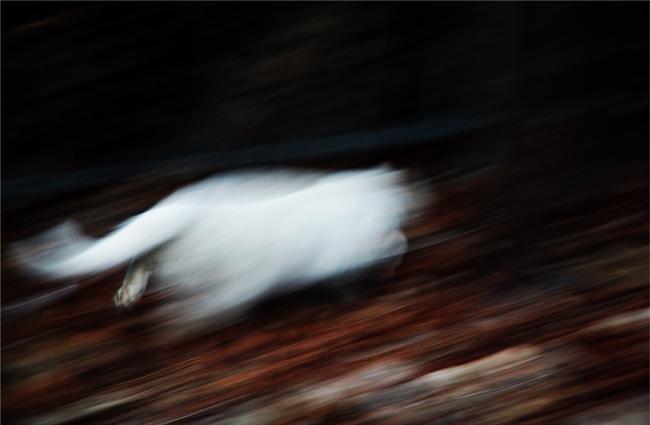 White cat running away into darkness