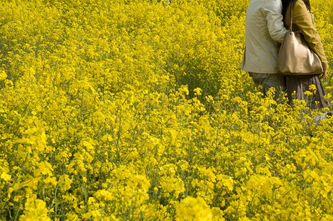 Couple standing in yellow flowers