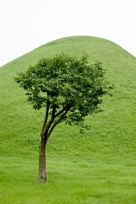 A solitary tree and grass covered tomb, Gyeongju, Korea