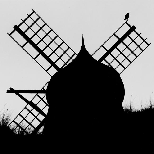 Silhouette of windmill and bird