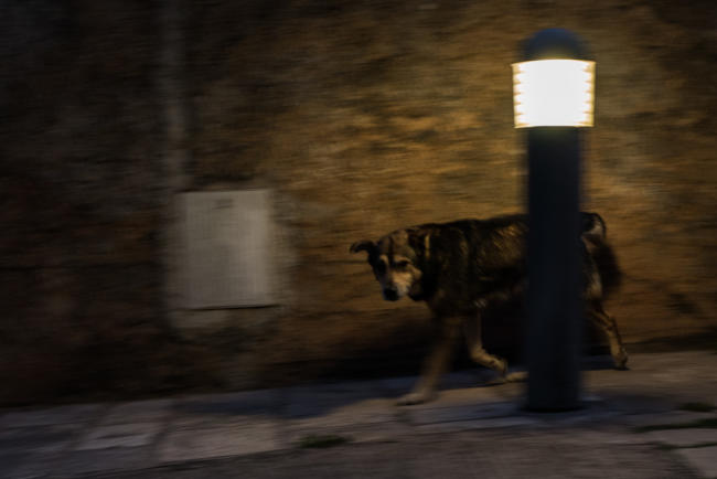 A dog in a street, Stari Grad