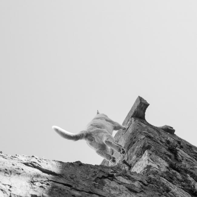 A cat climbing a wall